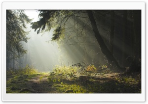 Forest 32 HD Wide Wallpaper for Widescreen