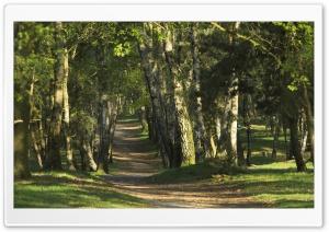 Forest 33 Ultra HD Wallpaper for 4K UHD Widescreen desktop, tablet & smartphone