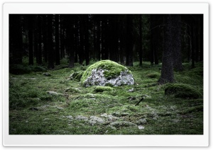 Forest 34 HD Wide Wallpaper for Widescreen