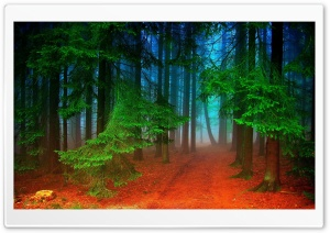 Forest HD Wide Wallpaper for 4K UHD Widescreen desktop & smartphone