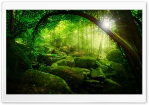 Forest HD Wide Wallpaper for 4K UHD Widescreen desktop & smartphone