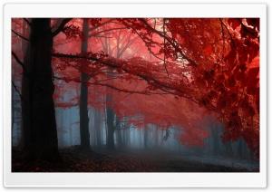 Forest Ultra HD Wallpaper for 4K UHD Widescreen desktop, tablet & smartphone