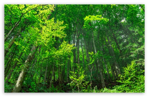 Forest UltraHD Wallpaper for Wide 16:10 5:3 Widescreen WHXGA WQXGA WUXGA WXGA WGA ; 8K UHD TV 16:9 Ultra High Definition 2160p 1440p 1080p 900p 720p ; Standard 4:3 5:4 3:2 Fullscreen UXGA XGA SVGA QSXGA SXGA DVGA HVGA HQVGA ( Apple PowerBook G4 iPhone 4 3G 3GS iPod Touch ) ; Smartphone 16:9 3:2 5:3 2160p 1440p 1080p 900p 720p DVGA HVGA HQVGA ( Apple PowerBook G4 iPhone 4 3G 3GS iPod Touch ) WGA ; Tablet 1:1 ; iPad 1/2/Mini ; Mobile 4:3 5:3 3:2 16:9 5:4 - UXGA XGA SVGA WGA DVGA HVGA HQVGA ( Apple PowerBook G4 iPhone 4 3G 3GS iPod Touch ) 2160p 1440p 1080p 900p 720p QSXGA SXGA ;