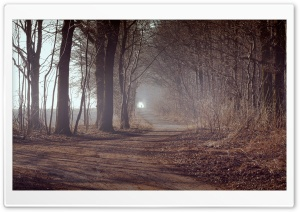 Forest Alley HD Wide Wallpaper for Widescreen