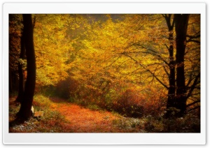 Forest Alley, Autumn HD Wide Wallpaper for Widescreen