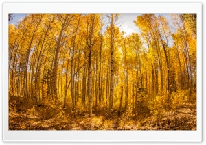 Forest Autumn 2 HD Wide Wallpaper for Widescreen