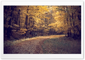 Forest Autumn HD Wide Wallpaper for Widescreen
