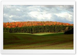 Forest Autumn 6 Ultra HD Wallpaper for 4K UHD Widescreen desktop, tablet & smartphone