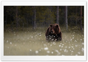 Forest Bear HD Wide Wallpaper for 4K UHD Widescreen desktop & smartphone