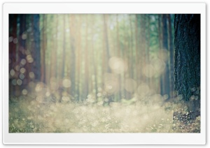 Forest Bokeh HD Wide Wallpaper for Widescreen