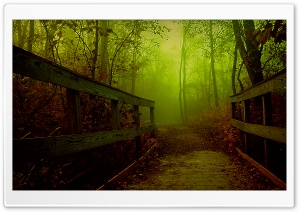 Forest Bridge HD Wide Wallpaper for Widescreen