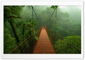 Forest Bridge HD Wide Wallpaper for 4K UHD Widescreen desktop & smartphone
