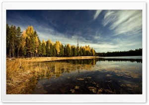 Forest By The Lake HD Wide Wallpaper for Widescreen