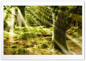 Forest Covered In Moss HD Wide Wallpaper for Widescreen