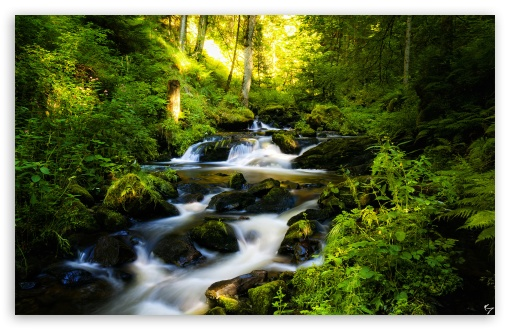 Forest Creek HD wallpaper for Wide 16:10 5:3 Widescreen WHXGA WQXGA WUXGA WXGA WGA ; HD 16:9 High Definition WQHD QWXGA 1080p 900p 720p QHD nHD ; Standard 4:3 5:4 3:2 Fullscreen UXGA XGA SVGA QSXGA SXGA DVGA HVGA HQVGA devices ( Apple PowerBook G4 iPhone 4 3G 3GS iPod Touch ) ; Tablet 1:1 ; iPad 1/2/Mini ; Mobile 4:3 5:3 3:2 16:9 5:4 - UXGA XGA SVGA WGA DVGA HVGA HQVGA devices ( Apple PowerBook G4 iPhone 4 3G 3GS iPod Touch ) WQHD QWXGA 1080p 900p 720p QHD nHD QSXGA SXGA ;