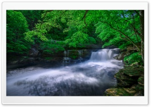 Forest Creek Ultra HD Wallpaper for 4K UHD Widescreen desktop, tablet & smartphone