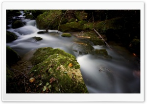 Forest Creek HD Wide Wallpaper for Widescreen