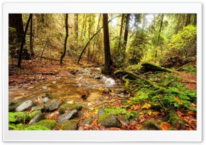 Forest Creek 9 HD Wide Wallpaper for Widescreen