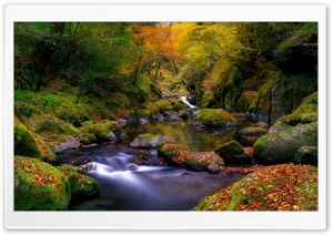 Forest Creek, Autumn HD Wide Wallpaper for 4K UHD Widescreen desktop & smartphone