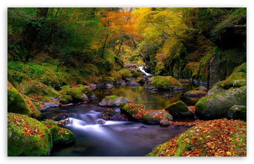 Forest Creek, Autumn HD wallpaper for Wide 16:10 5:3 Widescreen WHXGA WQXGA WUXGA WXGA WGA ; HD 16:9 High Definition WQHD QWXGA 1080p 900p 720p QHD nHD ; Standard 4:3 5:4 3:2 Fullscreen UXGA XGA SVGA QSXGA SXGA DVGA HVGA HQVGA devices ( Apple PowerBook G4 iPhone 4 3G 3GS iPod Touch ) ; Tablet 1:1 ; iPad 1/2/Mini ; Mobile 4:3 5:3 3:2 16:9 5:4 - UXGA XGA SVGA WGA DVGA HVGA HQVGA devices ( Apple PowerBook G4 iPhone 4 3G 3GS iPod Touch ) WQHD QWXGA 1080p 900p 720p QHD nHD QSXGA SXGA ; Dual 16:10 5:3 16:9 4:3 5:4 WHXGA WQXGA WUXGA WXGA WGA WQHD QWXGA 1080p 900p 720p QHD nHD UXGA XGA SVGA QSXGA SXGA ;