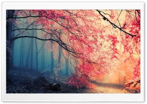 Forest Fall Colors HD Wide Wallpaper for Widescreen