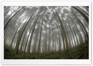 Forest Fisheye HD Wide Wallpaper for Widescreen