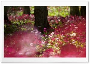 Forest Flowers HD Wide Wallpaper for Widescreen