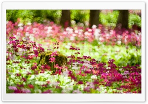 Forest Flowers, Summer HD Wide Wallpaper for Widescreen