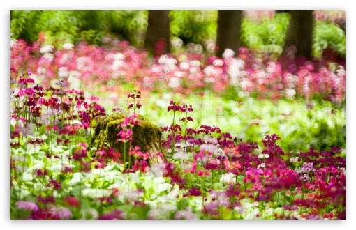 Forest Flowers, Summer ❤ 4K UHD Wallpaper for Wide 16:10 5:3 Widescreen WHXGA WQXGA WUXGA WXGA WGA ; UltraWide 21:9 24:10 ; 4K UHD 16:9 Ultra High Definition 2160p 1440p 1080p 900p 720p ; UHD 16:9 2160p 1440p 1080p 900p 720p ; Standard 4:3 5:4 3:2 Fullscreen UXGA XGA SVGA QSXGA SXGA DVGA HVGA HQVGA ( Apple PowerBook G4 iPhone 4 3G 3GS iPod Touch ) ; Smartphone 16:9 3:2 5:3 2160p 1440p 1080p 900p 720p DVGA HVGA HQVGA ( Apple PowerBook G4 iPhone 4 3G 3GS iPod Touch ) WGA ; Tablet 1:1 ; iPad 1/2/Mini ; Mobile 4:3 5:3 3:2 16:9 5:4 - UXGA XGA SVGA WGA DVGA HVGA HQVGA ( Apple PowerBook G4 iPhone 4 3G 3GS iPod Touch ) 2160p 1440p 1080p 900p 720p QSXGA SXGA ; Dual 16:10 5:3 16:9 4:3 5:4 3:2 WHXGA WQXGA WUXGA WXGA WGA 2160p 1440p 1080p 900p 720p UXGA XGA SVGA QSXGA SXGA DVGA HVGA HQVGA ( Apple PowerBook G4 iPhone 4 3G 3GS iPod Touch ) ; Triple 16:10 WHXGA WQXGA WUXGA WXGA ;