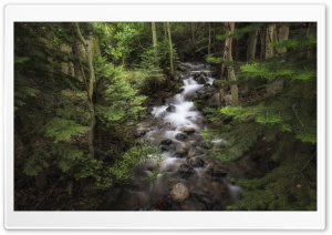 Forest Flowing Water HD Wide Wallpaper for Widescreen