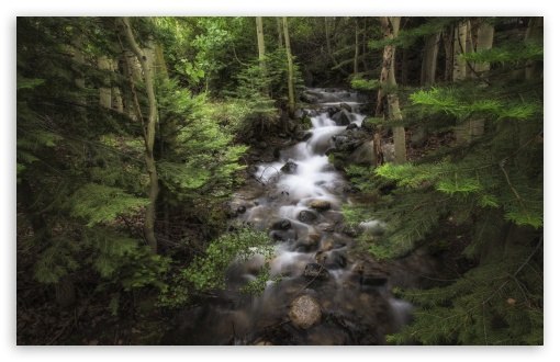 Forest Flowing Water ❤ 4K UHD Wallpaper for Wide 16:10 5:3 Widescreen WHXGA WQXGA WUXGA WXGA WGA ; UltraWide 21:9 24:10 ; 4K UHD 16:9 Ultra High Definition 2160p 1440p 1080p 900p 720p ; UHD 16:9 2160p 1440p 1080p 900p 720p ; Standard 4:3 5:4 3:2 Fullscreen UXGA XGA SVGA QSXGA SXGA DVGA HVGA HQVGA ( Apple PowerBook G4 iPhone 4 3G 3GS iPod Touch ) ; Smartphone 16:9 3:2 5:3 2160p 1440p 1080p 900p 720p DVGA HVGA HQVGA ( Apple PowerBook G4 iPhone 4 3G 3GS iPod Touch ) WGA ; Tablet 1:1 ; iPad 1/2/Mini ; Mobile 4:3 5:3 3:2 16:9 5:4 - UXGA XGA SVGA WGA DVGA HVGA HQVGA ( Apple PowerBook G4 iPhone 4 3G 3GS iPod Touch ) 2160p 1440p 1080p 900p 720p QSXGA SXGA ; Dual 16:10 5:3 16:9 4:3 5:4 3:2 WHXGA WQXGA WUXGA WXGA WGA 2160p 1440p 1080p 900p 720p UXGA XGA SVGA QSXGA SXGA DVGA HVGA HQVGA ( Apple PowerBook G4 iPhone 4 3G 3GS iPod Touch ) ;
