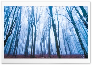 Forest, Fog Ultra HD Wallpaper for 4K UHD Widescreen desktop, tablet & smartphone
