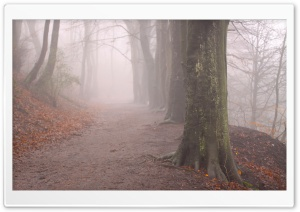 Forest Fog, Autumn HD Wide Wallpaper for Widescreen