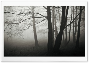 Forest Fog, Winter HD Wide Wallpaper for Widescreen