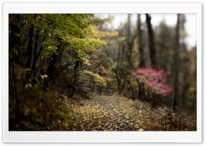 Forest Footpath HD Wide Wallpaper for Widescreen