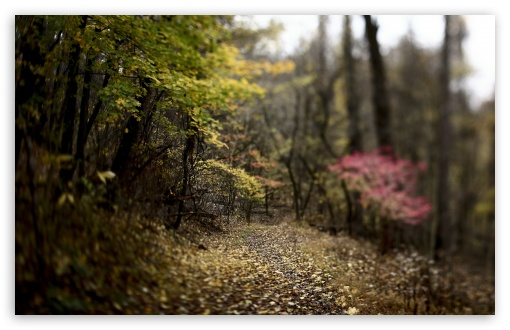 Forest Footpath HD wallpaper for Wide 16:10 5:3 Widescreen WHXGA WQXGA WUXGA WXGA WGA ; HD 16:9 High Definition WQHD QWXGA 1080p 900p 720p QHD nHD ; UHD 16:9 WQHD QWXGA 1080p 900p 720p QHD nHD ; Standard 4:3 5:4 3:2 Fullscreen UXGA XGA SVGA QSXGA SXGA DVGA HVGA HQVGA devices ( Apple PowerBook G4 iPhone 4 3G 3GS iPod Touch ) ; Tablet 1:1 ; iPad 1/2/Mini ; Mobile 4:3 5:3 3:2 16:9 5:4 - UXGA XGA SVGA WGA DVGA HVGA HQVGA devices ( Apple PowerBook G4 iPhone 4 3G 3GS iPod Touch ) WQHD QWXGA 1080p 900p 720p QHD nHD QSXGA SXGA ; Dual 16:10 5:3 16:9 4:3 5:4 WHXGA WQXGA WUXGA WXGA WGA WQHD QWXGA 1080p 900p 720p QHD nHD UXGA XGA SVGA QSXGA SXGA ;