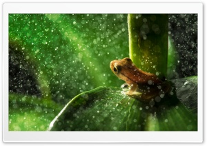 Forest Frog Rain HD Wide Wallpaper for Widescreen