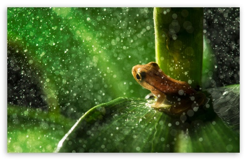 Forest Frog Rain ❤ 4K UHD Wallpaper for Wide 16:10 5:3 Widescreen WHXGA WQXGA WUXGA WXGA WGA ; 4K UHD 16:9 Ultra High Definition 2160p 1440p 1080p 900p 720p ; Standard 4:3 5:4 3:2 Fullscreen UXGA XGA SVGA QSXGA SXGA DVGA HVGA HQVGA ( Apple PowerBook G4 iPhone 4 3G 3GS iPod Touch ) ; Tablet 1:1 ; iPad 1/2/Mini ; Mobile 4:3 5:3 3:2 16:9 5:4 - UXGA XGA SVGA WGA DVGA HVGA HQVGA ( Apple PowerBook G4 iPhone 4 3G 3GS iPod Touch ) 2160p 1440p 1080p 900p 720p QSXGA SXGA ;