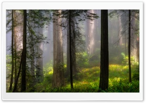 Forest From Fairytale HD Wide Wallpaper for Widescreen