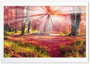 Forest Glade, Autumn HD Wide Wallpaper for Widescreen