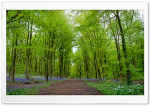 Forest, Green Trees, Spring Ultra HD Wallpaper for 4K UHD Widescreen desktop, tablet & smartphone