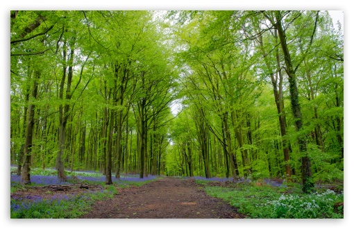 Forest Green Trees Spring Ultra Hd Desktop Background Wallpaper For 4k Uhd Tv Widescreen Ultrawide Desktop Laptop Multi Display Dual Monitor Tablet Smartphone