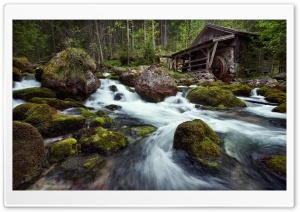 Forest House HD Wide Wallpaper for Widescreen