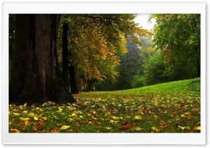 Forest In Autumn HD Wide Wallpaper for 4K UHD Widescreen desktop & smartphone