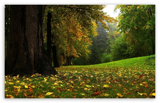 Forest In Autumn HD wallpaper for Wide 16:10 5:3 Widescreen WHXGA WQXGA WUXGA WXGA WGA ; HD 16:9 High Definition WQHD QWXGA 1080p 900p 720p QHD nHD ; Standard 4:3 5:4 3:2 Fullscreen UXGA XGA SVGA QSXGA SXGA DVGA HVGA HQVGA devices ( Apple PowerBook G4 iPhone 4 3G 3GS iPod Touch ) ; Tablet 1:1 ; iPad 1/2/Mini ; Mobile 4:3 5:3 3:2 16:9 5:4 - UXGA XGA SVGA WGA DVGA HVGA HQVGA devices ( Apple PowerBook G4 iPhone 4 3G 3GS iPod Touch ) WQHD QWXGA 1080p 900p 720p QHD nHD QSXGA SXGA ;
