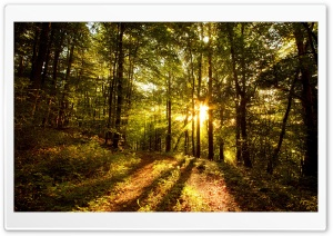 Forest In Late Afternoon HD Wide Wallpaper for Widescreen