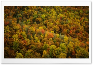 Forest In The Fall HD Wide Wallpaper for Widescreen