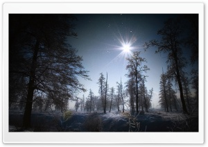 Forest In The Night HD Wide Wallpaper for Widescreen