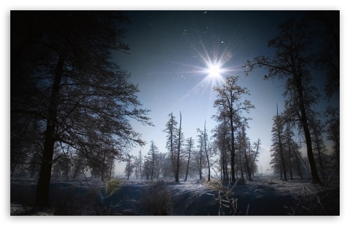 Forest In The Night ❤ 4K UHD Wallpaper for Wide 16:10 5:3 Widescreen WHXGA WQXGA WUXGA WXGA WGA ; 4K UHD 16:9 Ultra High Definition 2160p 1440p 1080p 900p 720p ; Standard 4:3 5:4 3:2 Fullscreen UXGA XGA SVGA QSXGA SXGA DVGA HVGA HQVGA ( Apple PowerBook G4 iPhone 4 3G 3GS iPod Touch ) ; Tablet 1:1 ; iPad 1/2/Mini ; Mobile 4:3 5:3 3:2 16:9 5:4 - UXGA XGA SVGA WGA DVGA HVGA HQVGA ( Apple PowerBook G4 iPhone 4 3G 3GS iPod Touch ) 2160p 1440p 1080p 900p 720p QSXGA SXGA ; Dual 16:10 5:3 16:9 4:3 5:4 WHXGA WQXGA WUXGA WXGA WGA 2160p 1440p 1080p 900p 720p UXGA XGA SVGA QSXGA SXGA ;