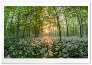 Forest In The Spring HD Wide Wallpaper for Widescreen